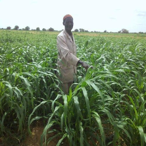 Defender el Medio Ambiente es defender los Derechos Humanos: Níger